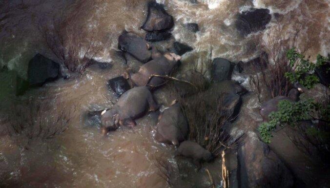 Cenšoties glābt cits citu, dabas parkā Taizemē bojā iet seši ziloņi