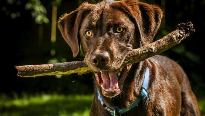 Пять ошибок, которые делают все владельцы собак (с точки зрения профессионала)