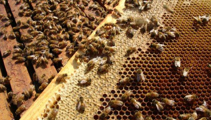 No vairākiem bišu dzēlieniem mirst sieviete