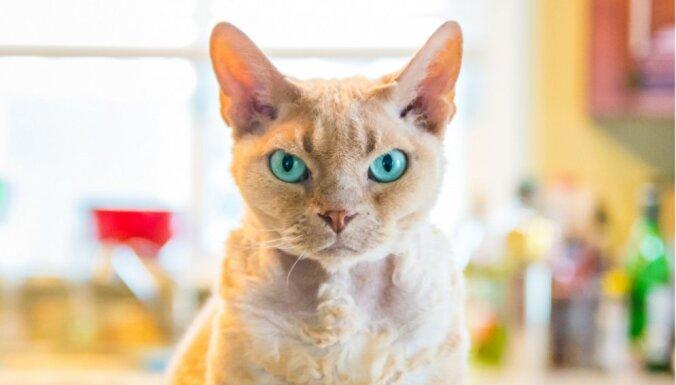 Топ-6 научных доказательств того, что котовладение полезно для здоровья