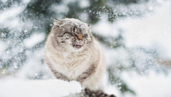 Otrdien vietām no rīta un dienā spēcīgi snigs