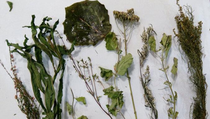 Dari pats: kvēpināmais augu smaržkociņš mājas enerģētiskajai attīrīšanai