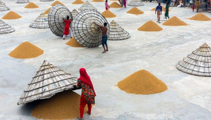 Dienas ceļojumu foto: Rīsu žāvēšana Bangladešā