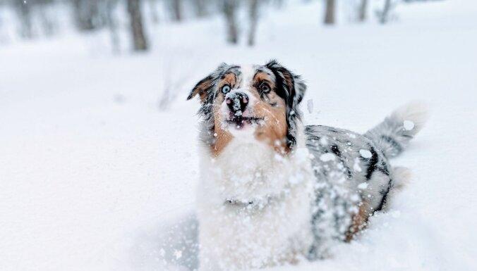 Dienas laikā stipri snigs, spēkā dzeltenais brīdinājums
