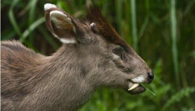 Astoņi neparasti savvaļas dzīvnieki, kurus tu varētu nezināt