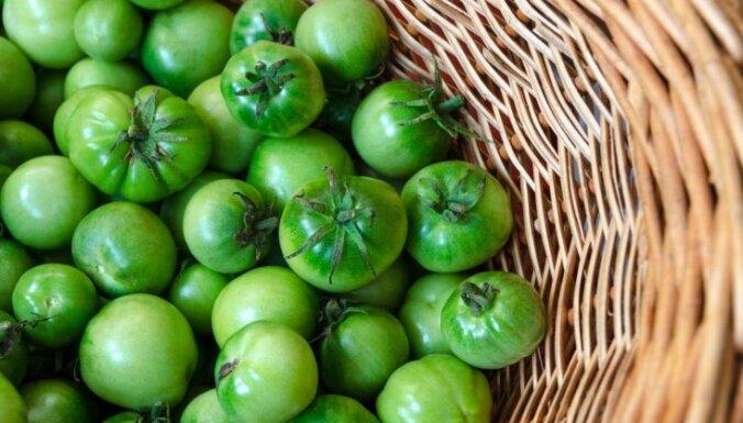 Pieredzes stāsts: kā ar ābolu ātrāk nogatavināt zaļus tomātus
