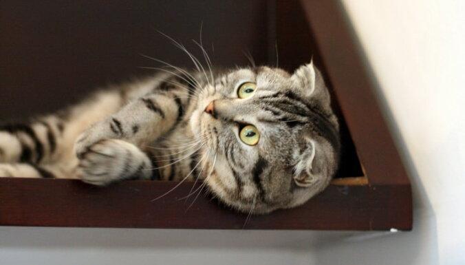 Запах кошачьей мочи: как устранить проблему