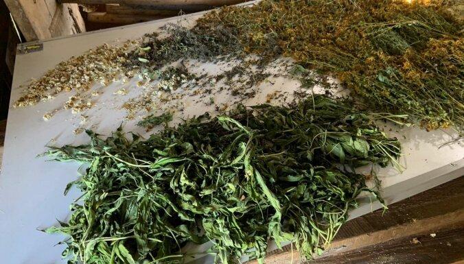 Полиция ликвидировала плантацию марихуаны: у подозреваемых изъяли винтовку
