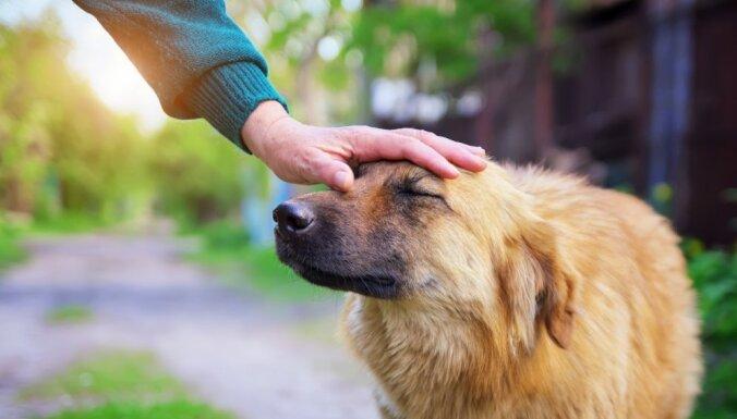 Kāpēc suns pieliec galvu, kad viņam mēģina pieskarties