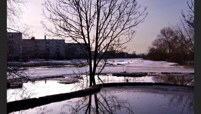 В Латвию вернулись зеленые дятлы и трясогузки