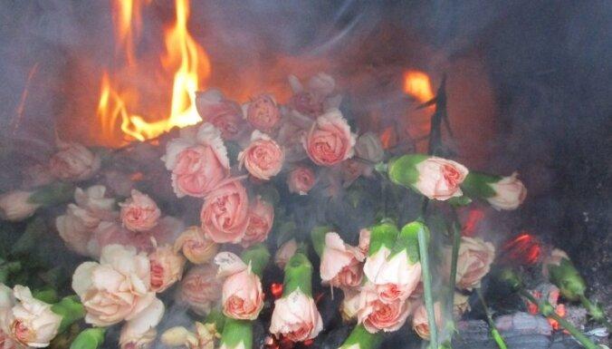 В России сожгли зараженные трипсом гвоздики из Латвии
