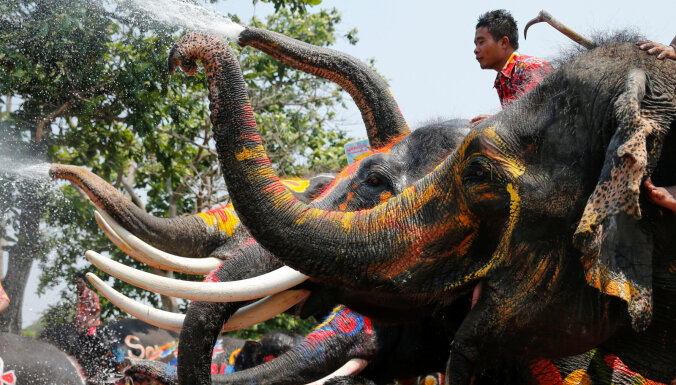 ВИДЕО: Слон на Шри-Ланке затоптал людей на фестивале