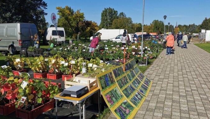 Nacionālais botāniskais dārzs 9. oktobrī aicina uz gadatirgu