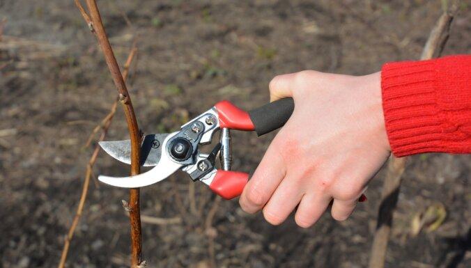 Kādus augus griezt, stādīt un modināt: dārza darbu apkopojums martā