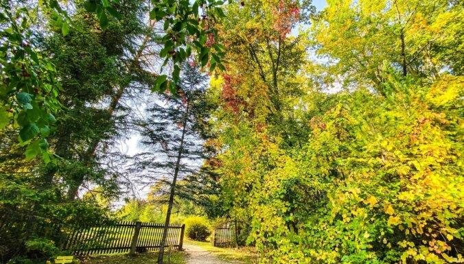 ФОТО. Всего 80 километров от Риги: Прогулка по берегу Даугавы в старейшем дендрарии Латвии