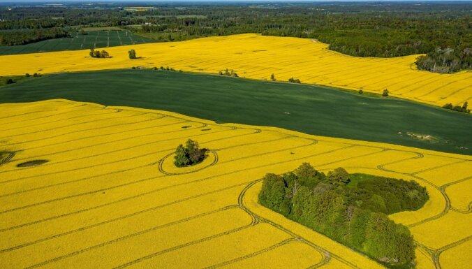 ФОТО. Как выглядят яркие желто-зеленые поля рапса в Латвии с высоты птичьего полета