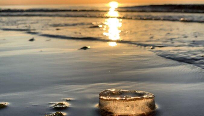 Medūzas, saulriets, Carnikava, jūra