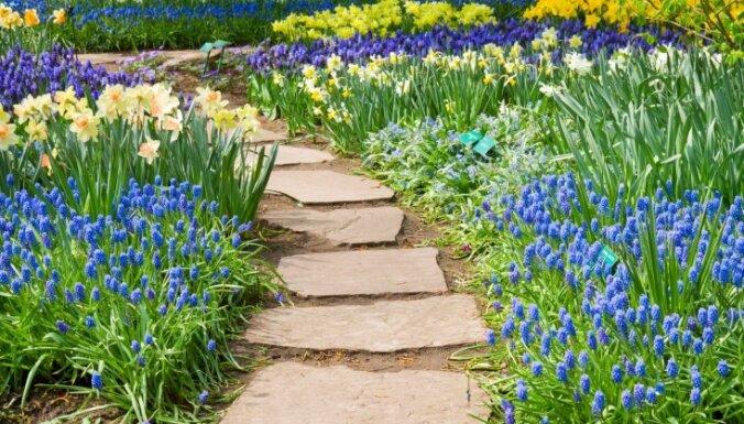 Dārza labiekārtošana no nulles – ko izvēlēties, lai tas ātri zaļotu