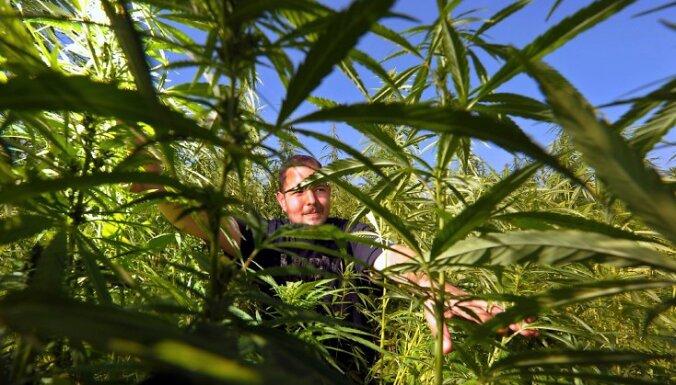 В Великобритании легализована медицинская марихуана