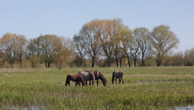 Skatu tornis, zirgi un reti augi: Lielupes palienes pļavas Jelgavā