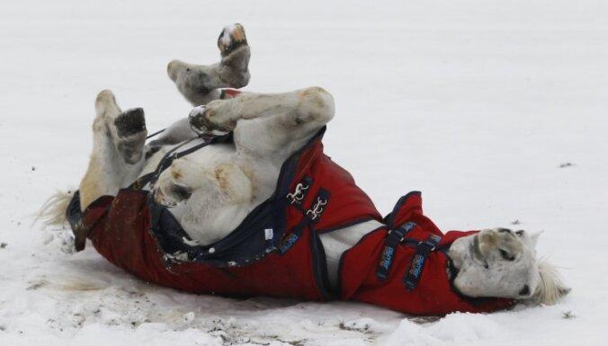 Фенолог: пришел Волчий месяц с полнолунием посереди. На Рождество ждите -20 и много снега