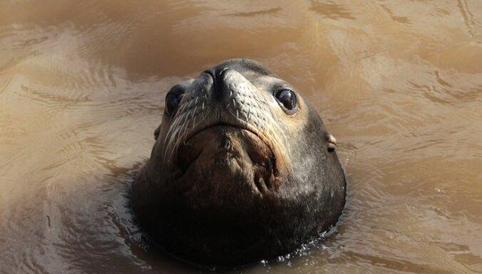 ВИДЕО: Морской лев схватил девочку за платье и утащил в воду