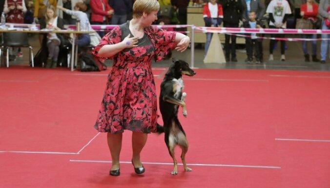 Танцы с собаками, экзотические коты, грызуны и многое другое на выставке Pet Expo