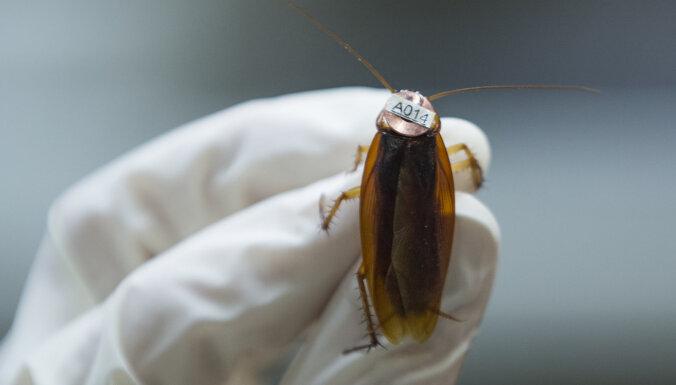 Российские врачи спасли жизнь таракану: в Красноярске провели уникальную операцию