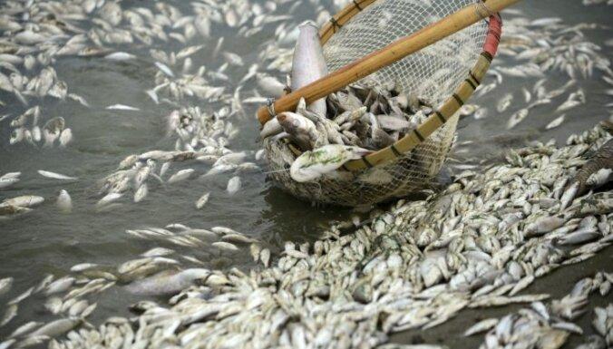 По неустановленным причинам в озере Пузес гибнет рыба