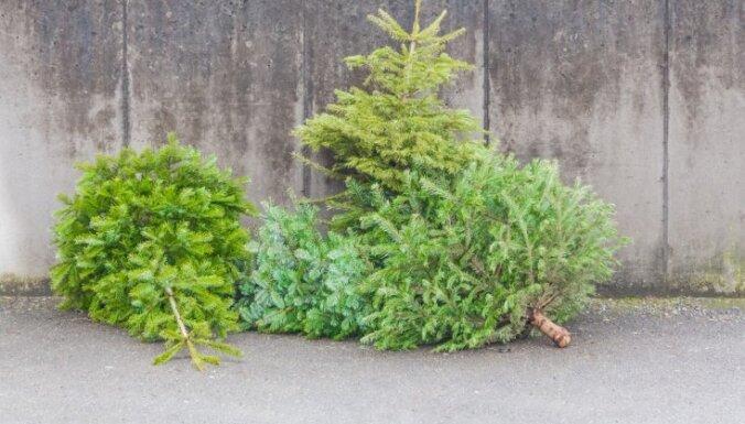 Рига потратит на рождественские елки более 20 тыс. евро
