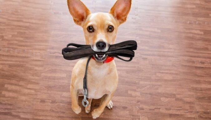 Tipiskākās suņu saimnieku kļūdas mīluļa apmācībā