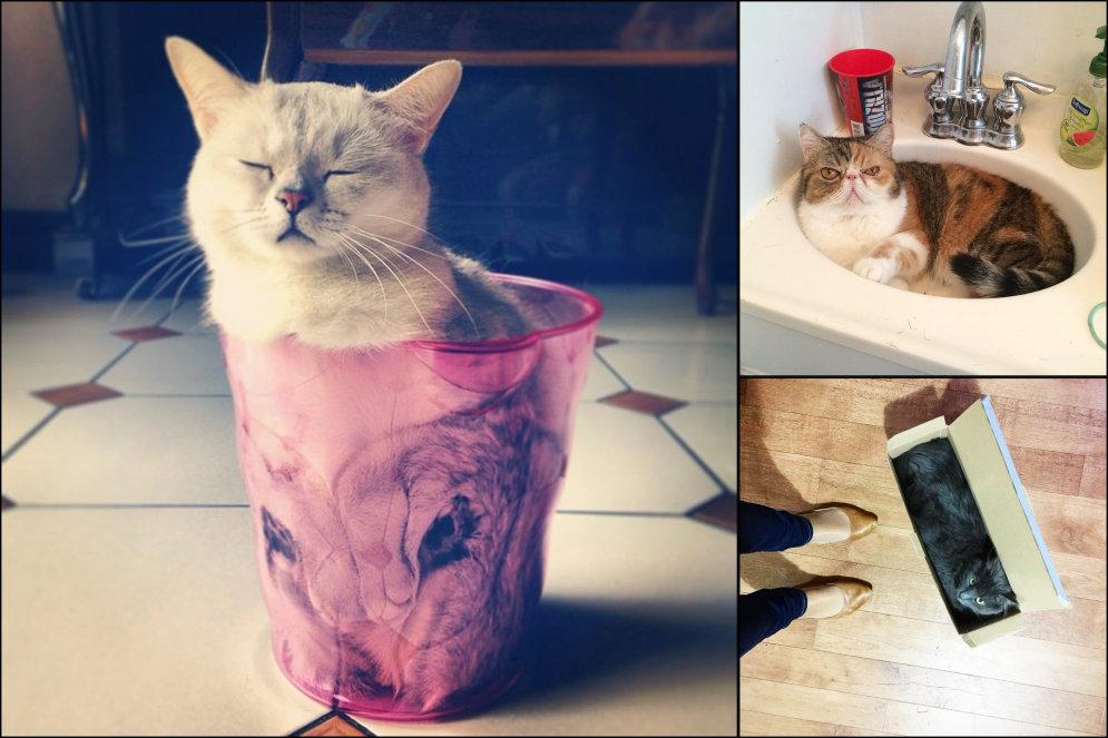 Законам природы вопреки: Топ-10 доказательств того, что коты — это жидкость