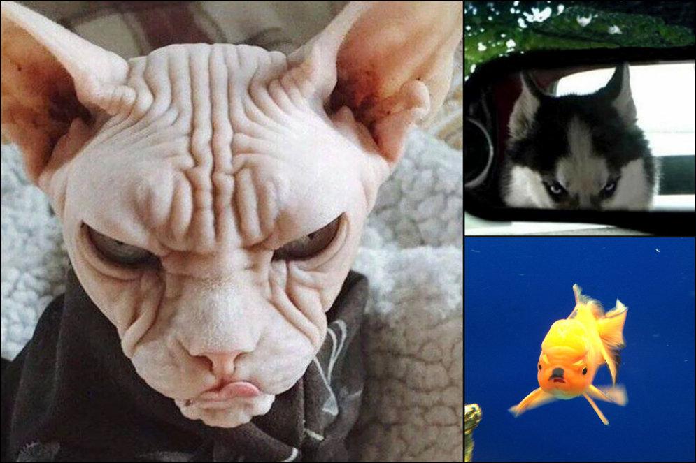 10 настолько злых животных, что они сейчас цапнут тебя зубами через экран