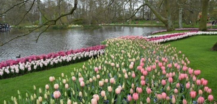 Ceļojuma stāsts: Holandes pavasaris Roterdamā