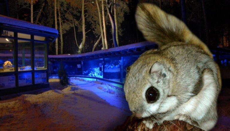 Ziemas naktīs Rīgas zoodārzā varēs vērot dzīvnieku uzvedību tumsā
