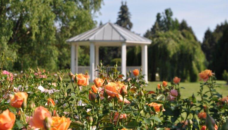 Foto: Nacionālajā botāniskajā dārzā krāšņi uzplaukušas rozes