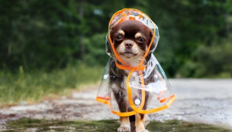 Понедельник будет дождливым