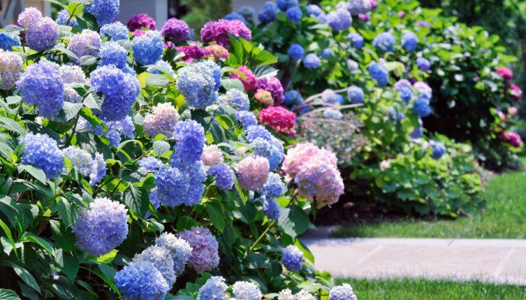 Последний месяц лета: Календарь садовых работ на август