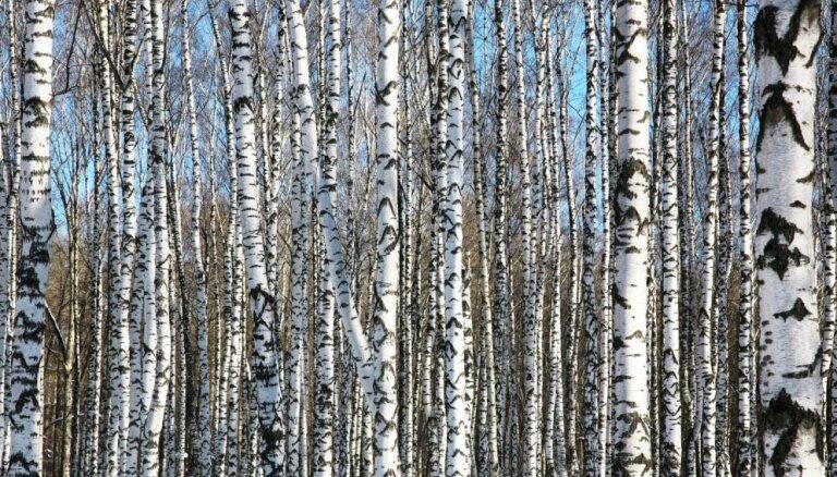 Dabas aizsardzības pārvalde vērsīsies pret mežistrādes uzņēmumu