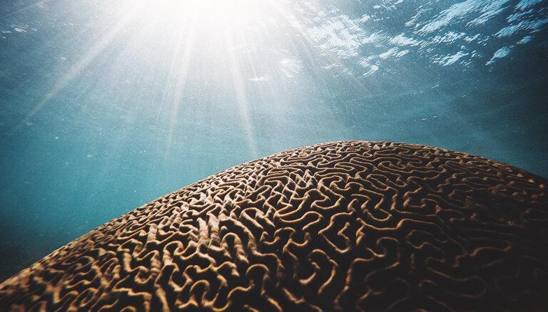 Smadzeņu emocionālā dzīve – kā veicināt pozitīvo domāšanu un vairot labklājību