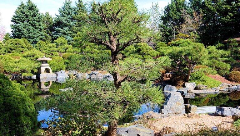 Japāņu stila dārzs: izveides knifi un vēlamie augi