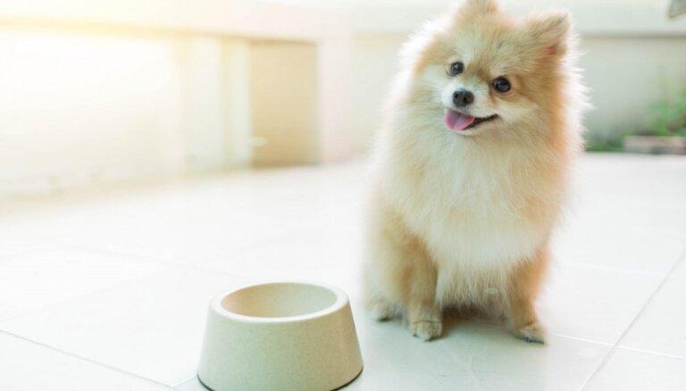 PVD apturējis visas 'Tukuma straume' noliktavā esošās suņu barības izplatīšanu