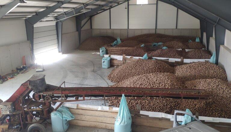 Kartupeļu audzētājs 'Piekalnes' attīstībā iegulda 400 tūkstošus eiro