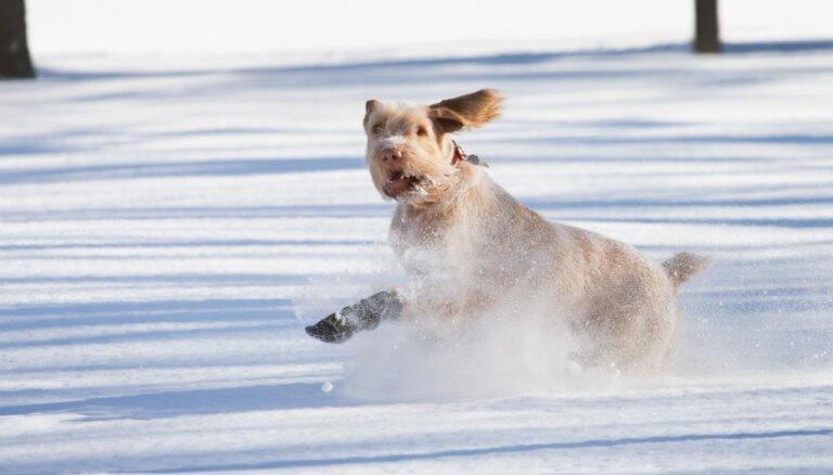 Снег накрыл Латвию: высота сугробов - до 15 сантиметров