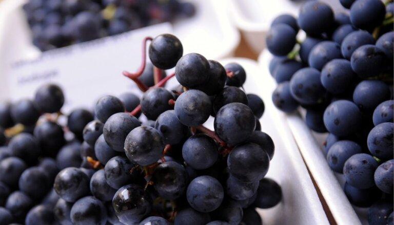 Bauskas pilī 26. un 27. septembrī notiks vīnogu izstāde