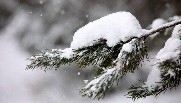Снежные валы. Пользователи соцсетей делятся фотографиями редкого природного явления