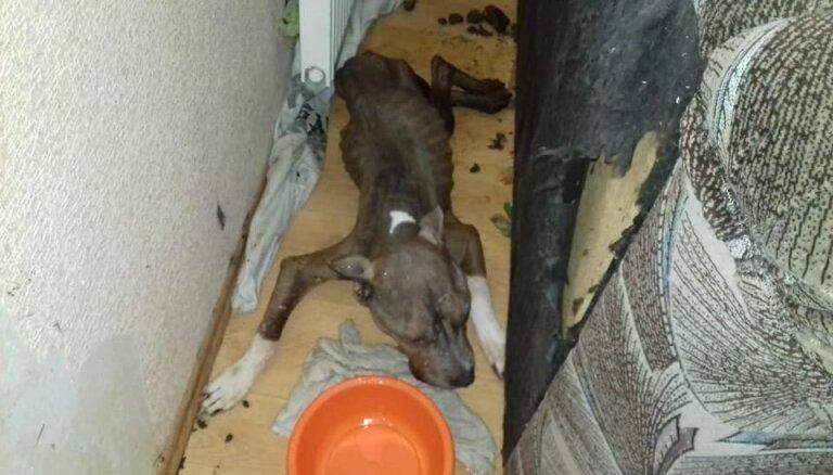 Nobadināto terjeru saimniekiem piespriež piespiedu darbu; dzīvnieku patversmes pieprasa sniegt apelāciju