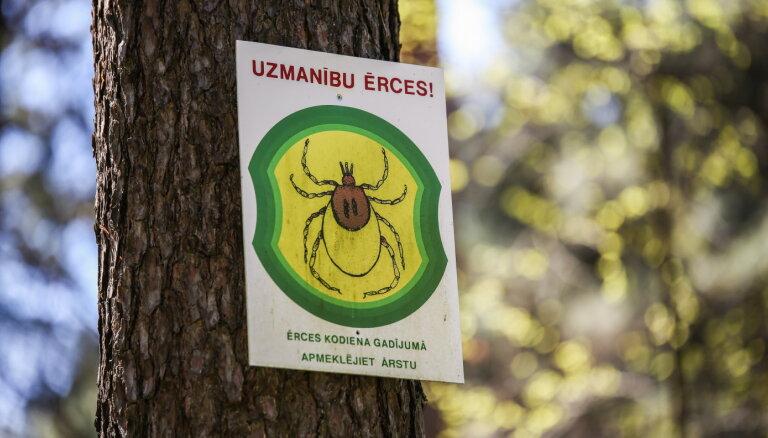 В латвийских лесах проснулись клещи