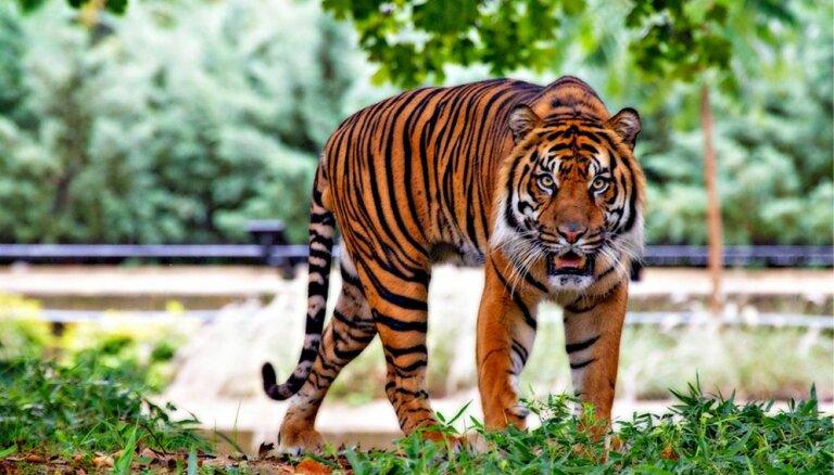 Руками не трогать: 10 видов животных, которые могут не пережить следующие 10 лет