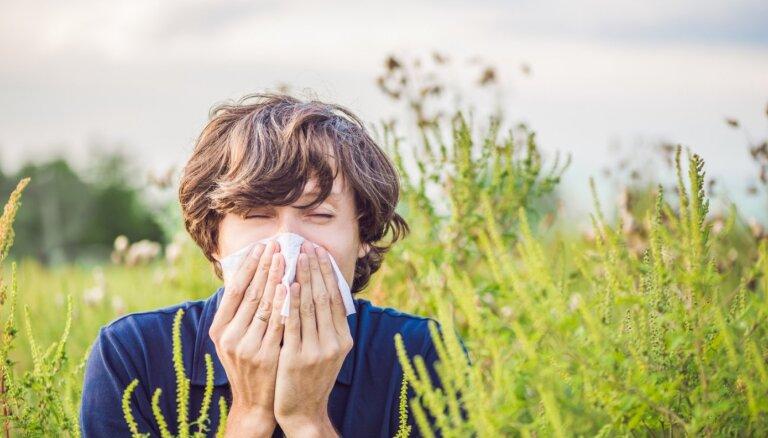 Эксперт предупреждает: эти четыре аллергена могут испортить вам лето